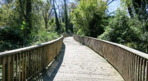 The Scenic Trail In DC You'll Want To Take At Least Once This Summer