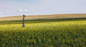 Most People Don't Know About This Magical Sunflower Field Hiding In Wyoming