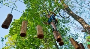 7 Amazing Treetop Adventures You Can Only Have In West Virginia
