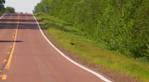 A Drive Down Minnesota's Loneliest Road Will Take You Miles And Miles Away From It All