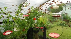 You'll Want To Plan A Summer Day Trip To Pennsylvania's Magical Butterfly House