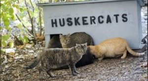 Feral Cats Have A Home On The UNL Campus In Lincoln, Nebraska