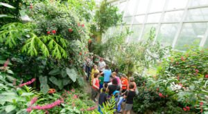 You'll Want To Plan A Day Trip To North Carolina's Magical Butterfly House