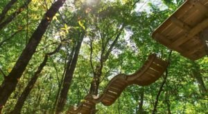 6 Amazing Treetop Adventures You Can Only Have In Indiana