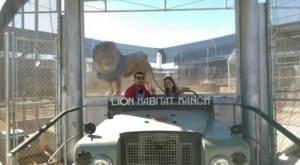 Not Many People Know About This Incredible Lion Sanctuary Right Here In Nevada