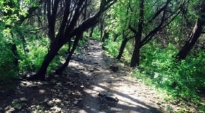 The Hiking Trail Hiding In Austin That Will Transport You To Another World