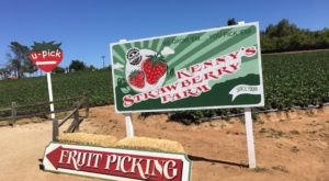 The Charming Strawberry Farm In Southern California That's Picture Perfect For A Summer Day