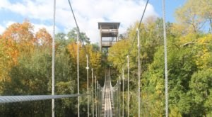8 Amazing Treetop Adventures You Can Only Have In Minnesota