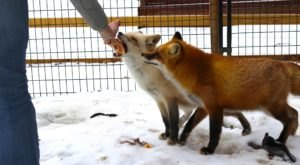Interact With Exotic Creatures At Animal Adventures, An Animal Sanctuary In Massachusetts