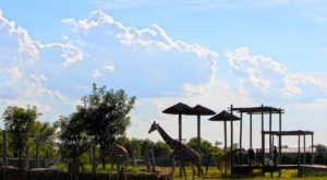 The One Place In Kansas That's Absolutely Perfect For Your Next Family Trip