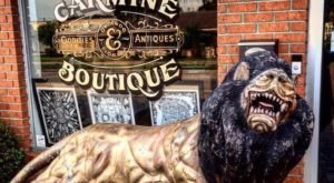 The Tiny Shop In Florida That Is So Strange You'll Want To Visit