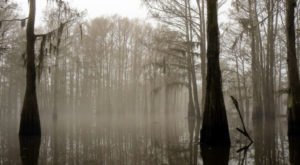 The Sinister Story Behind This Popular Louisiana Swamp Will Give You Chills