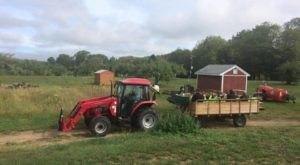 This Charming Little Farm Is The Best Kept Secret In Rhode Island