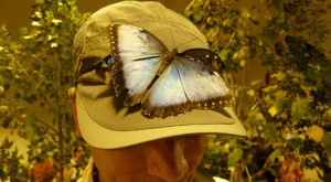 You'll Want To Plan A Day Trip To Minnesota's Magical Butterfly House