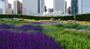 The Secret Garden In Chicago You're Guaranteed To Love