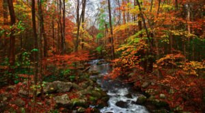 16 Picture Perfect Fall Day Trips To Take In Tennessee
