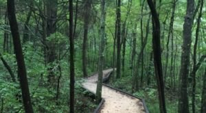 The Boardwalk Trail In Kentucky You'll Want To Explore Before Summer Ends