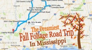 This Dreamy Road Trip Will Take You To The Best Fall Foliage In All Of Mississippi