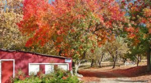 The Charming Cider Mill In Southern California That Will Have You Longing For Fall