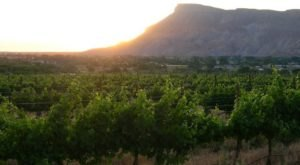 Not Many People Realize That Colorado Has A Fruit & Wine Byway You'll Want To Visit ASAP