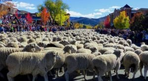 This Town In Idaho Holds A Parade For Sheep Every Year And It's Just As Weird As It Sounds