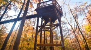 This Canopy Walk In Ohio Is The Perfect Way To See The Fall Colors Like Never Before