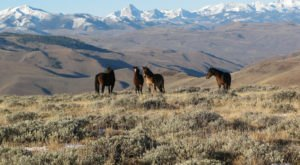 The Breathtaking Place In Idaho Where You Can Watch Wild Horses Roam