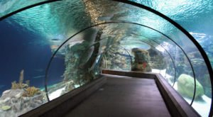 This Underwater Tunnel In Nebraska Will Enchant You In The Best Way Possible