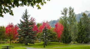 The One Park In Portland That's Picture Perfect For A Fall Day