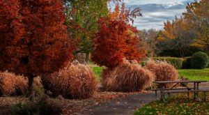 The Best Times And Places To View Fall Foliage In Idaho