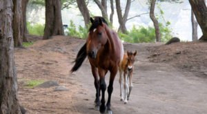 The Breathtaking Place In Hawaii Where You Can Watch Wild Horses Roam