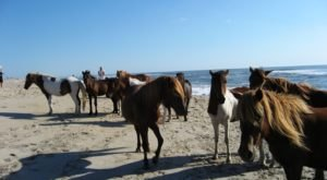 The Breathtaking Park In Maryland Where You Can Watch Wild Horses Roam