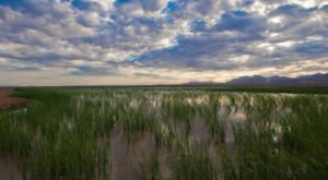 Most People Don't Realize These 9 Hauntingly Beautiful Wetlands Even Exist In Arizona