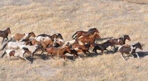 The Breathtaking Prairie In Kansas Where You Can Watch Wild Horses Roam