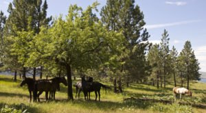 The Breathtaking Park In Montana Where You Can Watch Wild Horses Roam