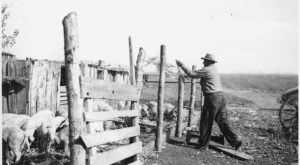 These 12 Rare Photos Show North Dakota's Agriculture History Like Never Before