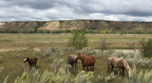 The Breathtaking Park In North Dakota Where You Can Watch Wild Horses Roam