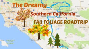 This Dreamy Road Trip Will Take You To The Best Fall Foliage In All Of Southern California