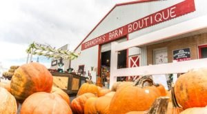 12 Harvest Festivals In Minnesota That Will Make Your Autumn Awesome