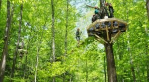 6 Amazing Treetop Adventures You Can Only Have In Massachusetts