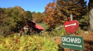 These 10 Charming Apple Orchards In New Hampshire Are Great For A Fall Day