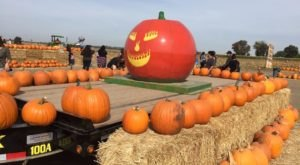 These 7 Charming Pumpkin Patches In Northern California Are Picture Perfect For A Fall Day
