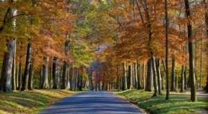 The Best Times And Places To View Fall Foliage In Maryland