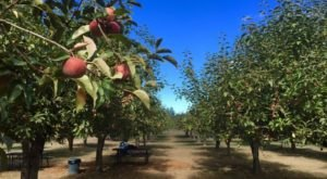 These 6 Charming Apple Orchards In Northern California Are Great For A Fall Day