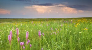 Visit This Missouri Prairie for Stunning Views and A Chance To Spot These Rare Birds