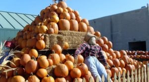 These 7 Charming Pumpkin Patches In St. Louis Are Picture Perfect For A Fall Day