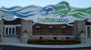 Buffalo's Zoo Is One Of The Oldest In The U.S. Here's What Makes It Timeless