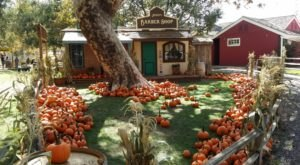 Southern California's Pumpkin Patch Train Ride Is A Great Way To Spend A Fall Day