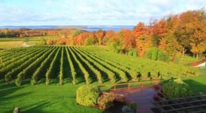 9 Beautiful Michigan Wineries That Are Pure Magic In The Fall