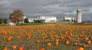 These 10 Charming Pumpkin Patches In Maryland Are Picture Perfect For A Fall Day
